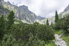 Dolina van Malastudena wandelingssleep in Hoge Tatras, de zomer toeristisch seizoen, wilde aard, toeristische sleep royalty-vrije stock foto