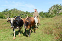 Dolina Vinales na Kuba Zdjęcia Royalty Free