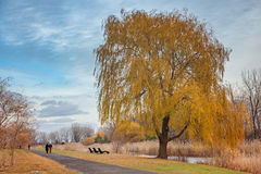 Dolina w miasto parku Żółci drzewa Fotografia Stock
