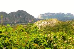 dolinni vinales obrazy royalty free