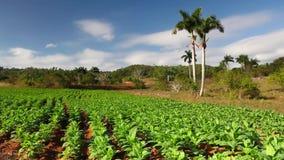 Dolinny De Vinales, pinar del rio, Kuba zbiory