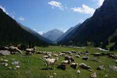 Dolinny widok cakle i góry, Kirgistan fotografia royalty free