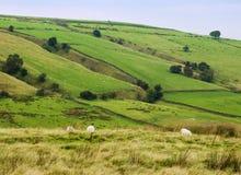 doliny Yorkshire Obraz Stock