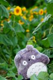 A doll of Chinchilla in a field of Sunflower Royalty Free Stock Photos