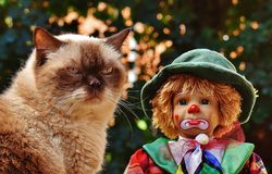 Doll, Clown, Sad, Cat Royalty Free Stock Photo