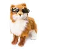 Doll dog wearing  glasses  beautiful  on white background Stock Image