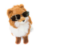 Doll dog wearing  glasses  beautiful  on white background Royalty Free Stock Photos