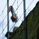 Doll hanging from barbed wire fence Stock Photography