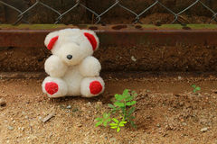 Doll and plant. The doll is placed at the fence near the green plant Stock Images