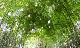 Doll rain on bamboo Royalty Free Stock Photo