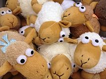 Doll Sheep Stock Photos