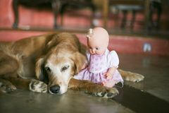 Doll sitting next to a dog stock photo