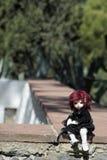 Doll van harsbjds openluchtschoonheid stock foto's