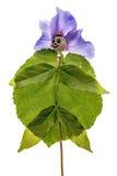 Doll van papaverhoofd en bloemen royalty-vrije stock afbeelding