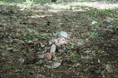 Doll voor verlaten kleuterschool in Tchernobyl Stock Foto's
