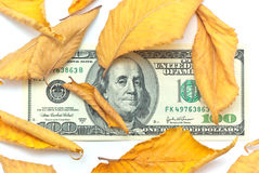 Dollar in autumn leafs Stock Photography