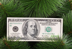 Dollar banknote on green pine. Closeup Stock Images