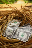 Dollar Banknote in nest eggs, Growing of business and genesis Business, New business starting by banknotes, Business concept Stock Photos