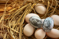 Dollar Banknote in nest eggs, Growing of business and genesis Business, New business starting by banknotes, Business concept Royalty Free Stock Image