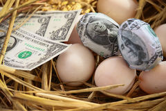 Dollar Banknote in nest eggs, Growing of business and genesis Business, New business starting by banknotes, Business concept Royalty Free Stock Photos