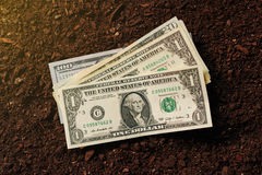 Dollar banknotes cash money in soil ground, income in agricultur Stock Photo