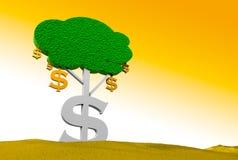 Dollar-Baum Stockbild