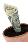 Dollar bill in flower pot. Interest rates, growth. Stock Photos