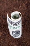 Dollar Bill Growing in Grond stock foto's