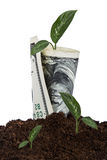 Dollar Bill Growing in Soil Royalty Free Stock Image