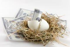 Dollar bill in nest egg Stock Photo