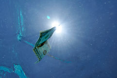 Dollar bill underwater Stock Photography