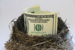 Dollar bills in a bird nest Stock Image