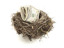 Dollar bills in bird nest isolated Royalty Free Stock Images
