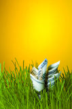 Dollar bills among green grass Royalty Free Stock Images
