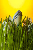 Dollar bills growing in the grass Royalty Free Stock Photos