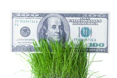 Dollar bills growing in the green grass Royalty Free Stock Image
