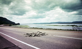 Dollar bills on a highway. In old photo Royalty Free Stock Photos