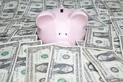 Dollar bills and piggy bank. Piggy bank placed up to its nose in a pile of dollars Royalty Free Stock Photo