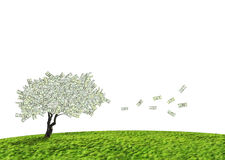 Dollar cash tree. Concept of a cash tree of American dollar banknotes with leaves falling of detoning banking and savings Royalty Free Stock Photos
