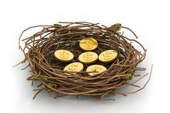 Dollar coin in nest. Dollar coins in being protected in a nest. Conceptual design Stock Photography
