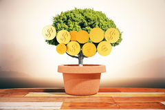 Dollar coins on tree. Financial growth concept with dollar coins growing on small green tree in pot on abstract background. 3D Rendering Royalty Free Stock Photos
