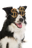 Dollar dog Royalty Free Stock Photos