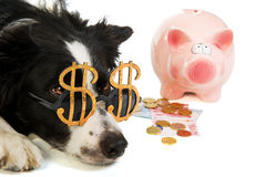 Dollar dog with piggy bank Royalty Free Stock Photos