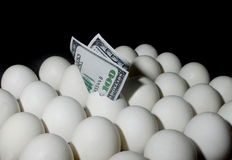 Dollar in Eggs Stock Photos