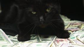 Dollar en een zwarte kat stock video