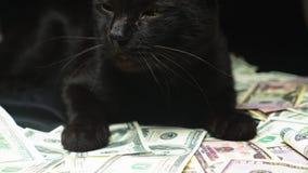 Dollar en een zwarte kat stock videobeelden