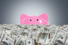 Dollar Farm with Pink Piggy Bank Stock Photo