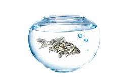 Dollar fish Royalty Free Stock Photo