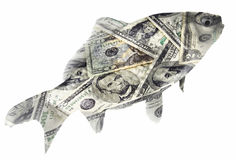 Dollar Fish. Small fish in a dollar costume isolated on white Royalty Free Stock Photo