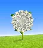 Dollar flower. Concept of a sun flower with dollar bill leaves Royalty Free Stock Photos